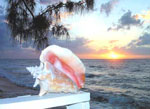 Conch Sunset - 8x10  $30.00