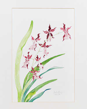 Orchid Two watercolor 17 x 23 Price - $450.00