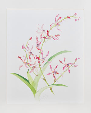 Vanda Orchid watercolor 22 x 26 Price - $525.00